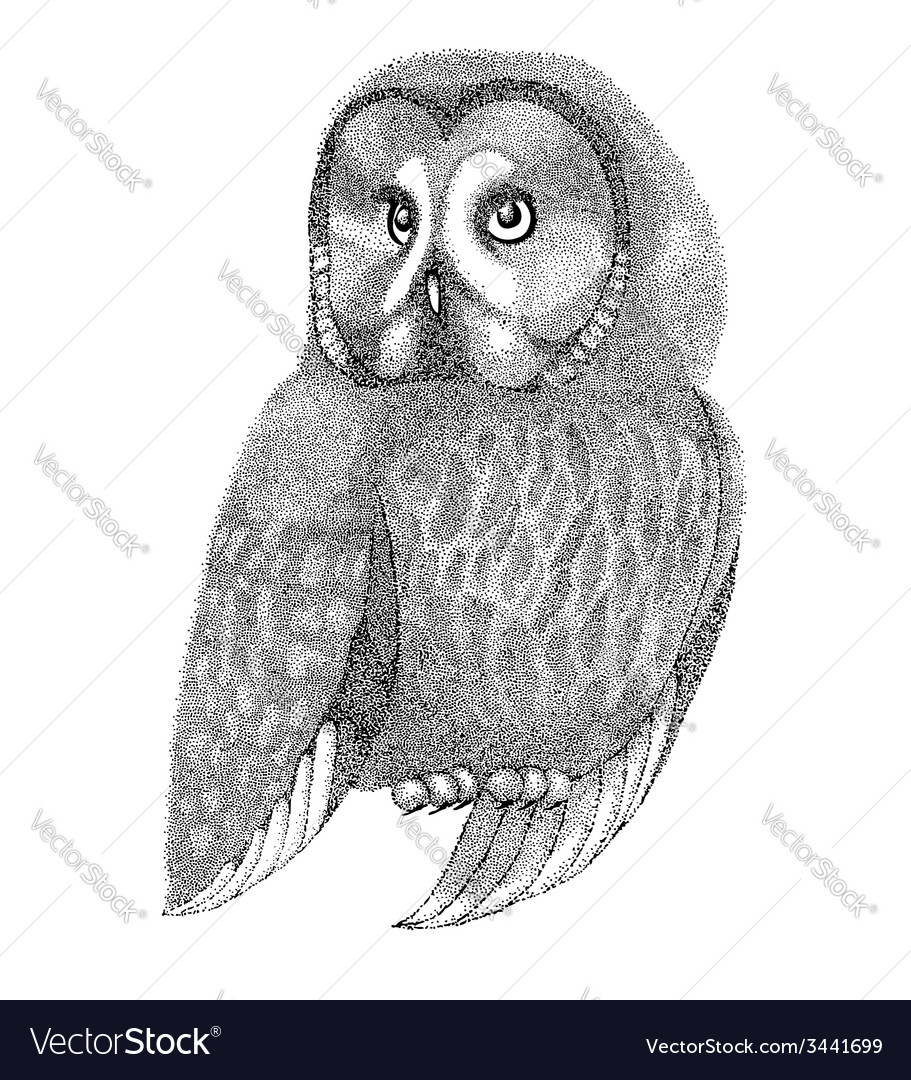 Sketch owl drawn with pen and ink vector | Price: 1 Credit (USD $1)