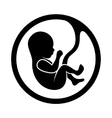 Fetus icon isolated on white background vector