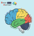 Brain anatomy flat design vt vector