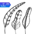 Hand drawn feather set vector