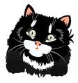 Nice black kitty on white vector