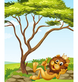 A king lion lying down near the tree vector