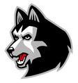 Siberian husky dog mascot vector