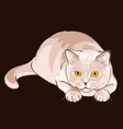 British shorthair lilac cat sits in ambush vector