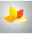 Colorful orange autumn leaves isolated on grey vector