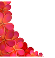 Frangipani frame with water drops vector