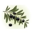 Black olives branch vector