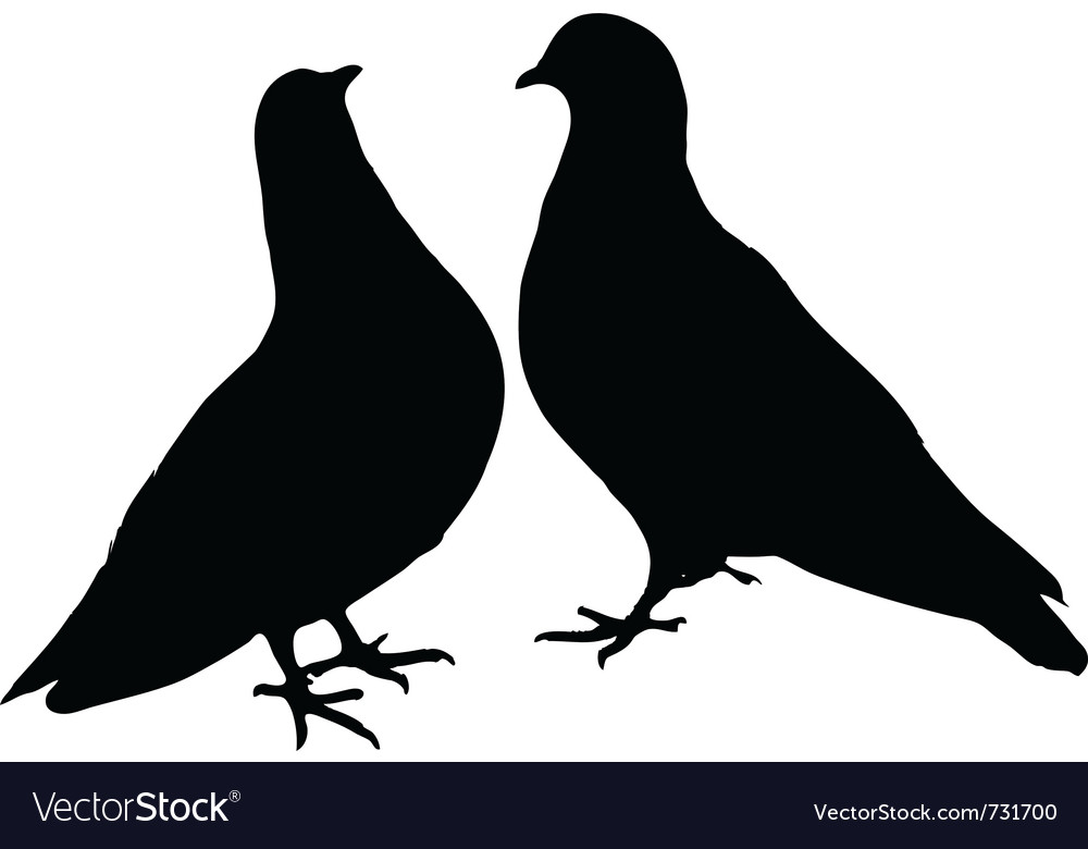 Pigeons vector | Price: 1 Credit (USD $1)