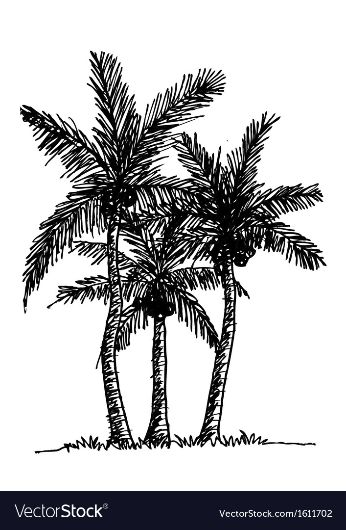 Palm tree tropical palm trees black silhouettes b vector | Price: 1 Credit (USD $1)