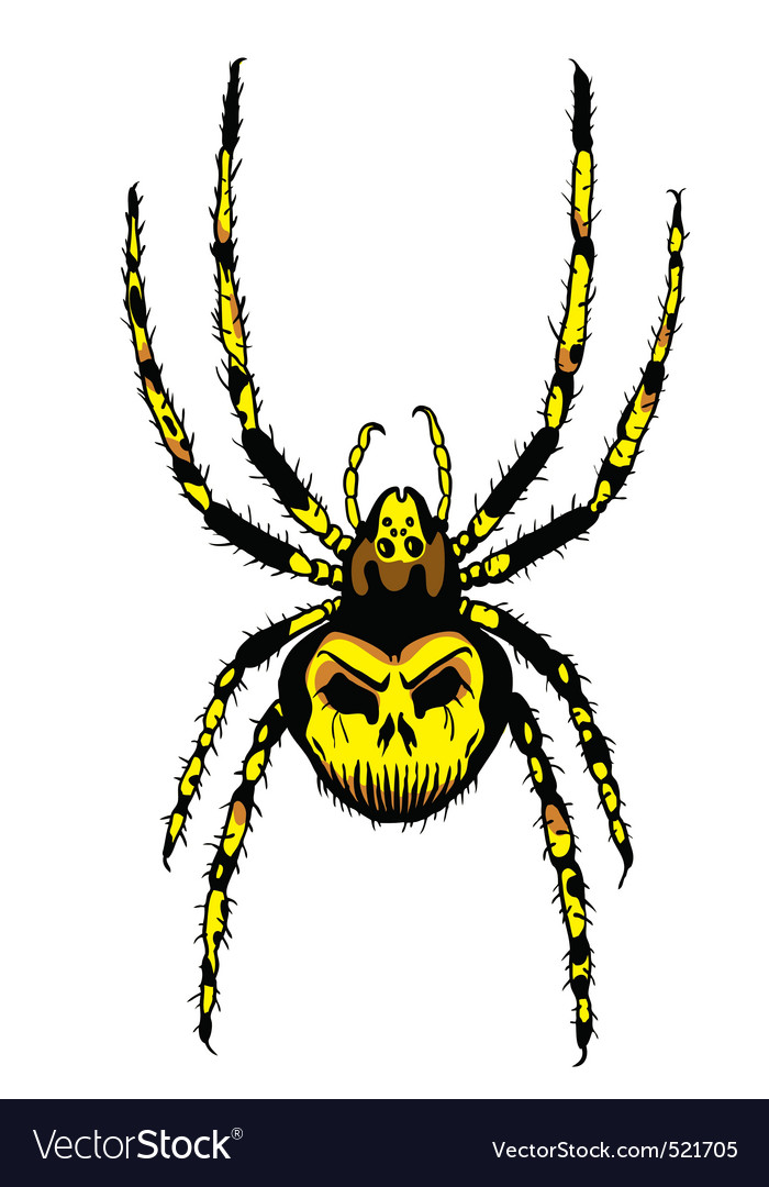 Spider with skull on the body vector | Price: 1 Credit (USD $1)