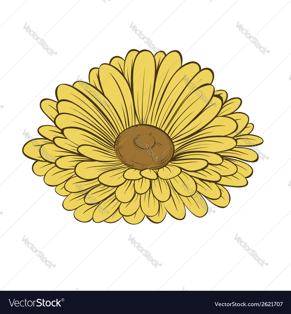 Daisy flower isolated on white background vector | Price: 1 Credit (USD $1)