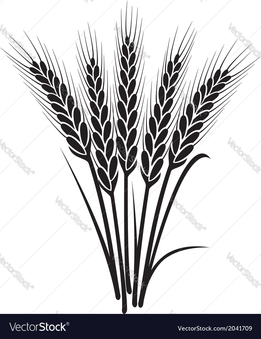 Bunch of wheat ears vector | Price: 1 Credit (USD $1)