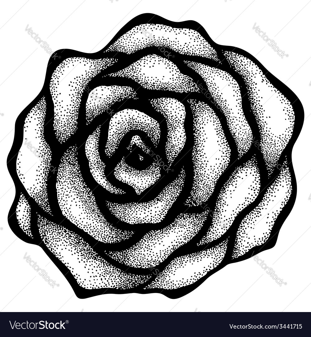 Rose free-hand drawing in a graphic style points vector | Price: 1 Credit (USD $1)
