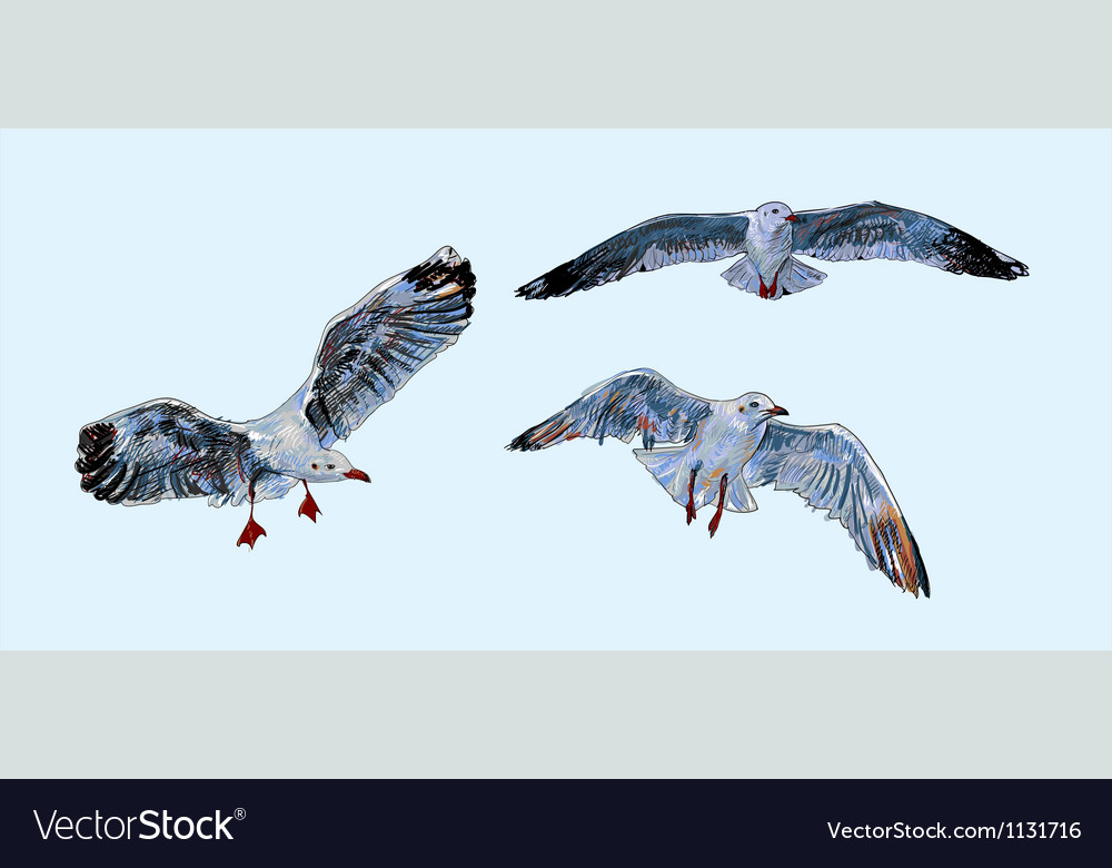 Flying seagull vector | Price: 1 Credit (USD $1)