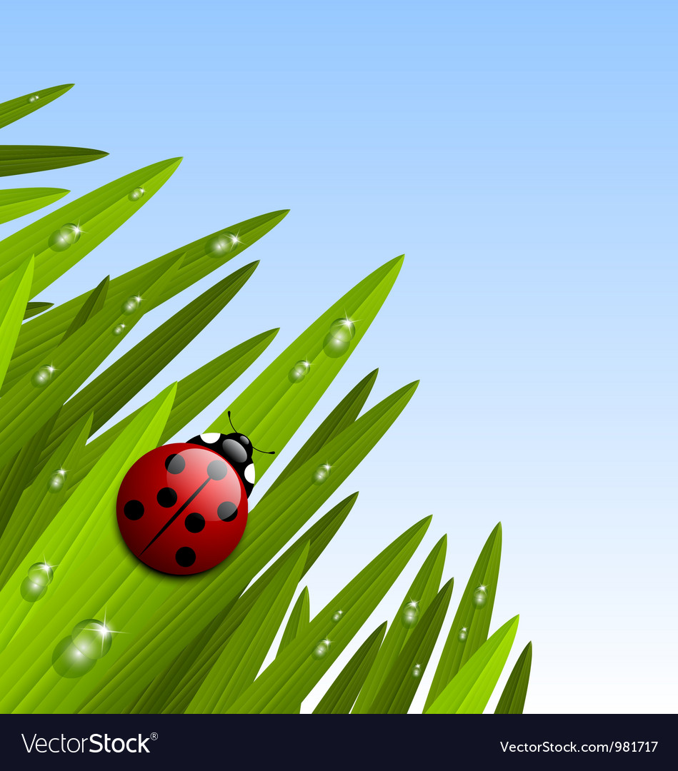 Ladybug on grass vector | Price: 1 Credit (USD $1)