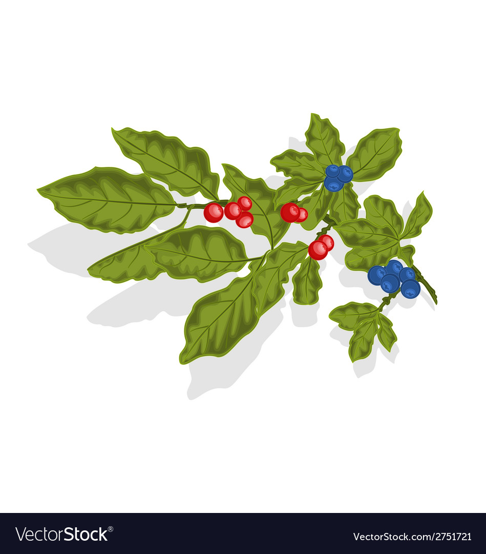 Blueberries twig vector | Price: 1 Credit (USD $1)