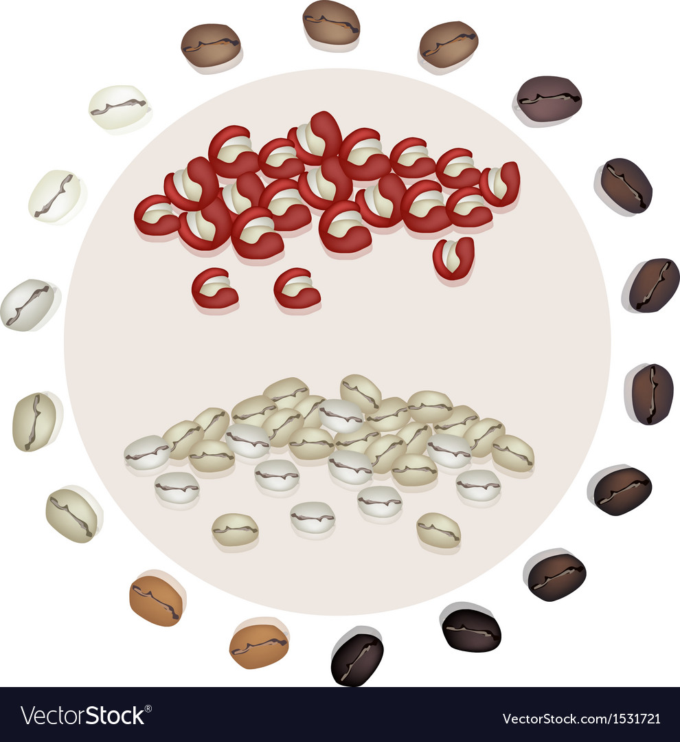 Dry coffee berries and roasted coffee beans vector | Price: 1 Credit (USD $1)