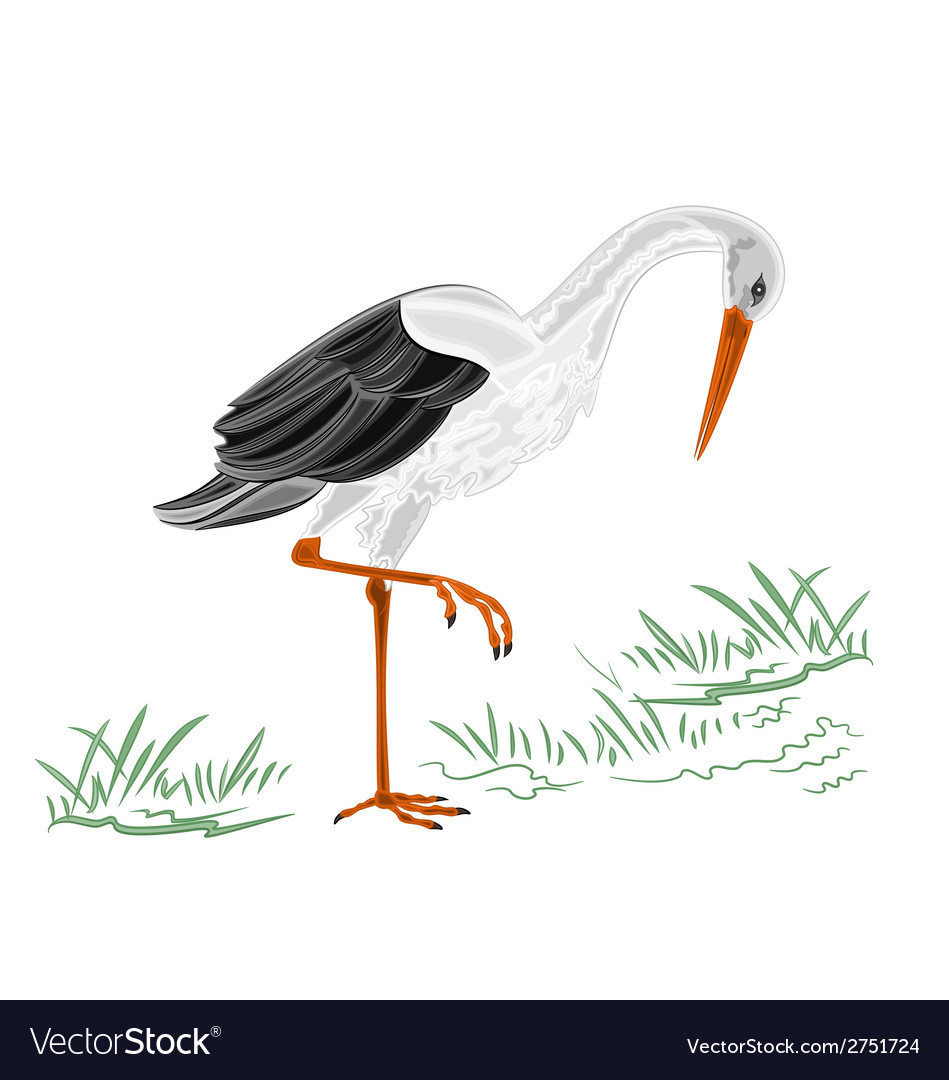 White stork vector | Price: 1 Credit (USD $1)
