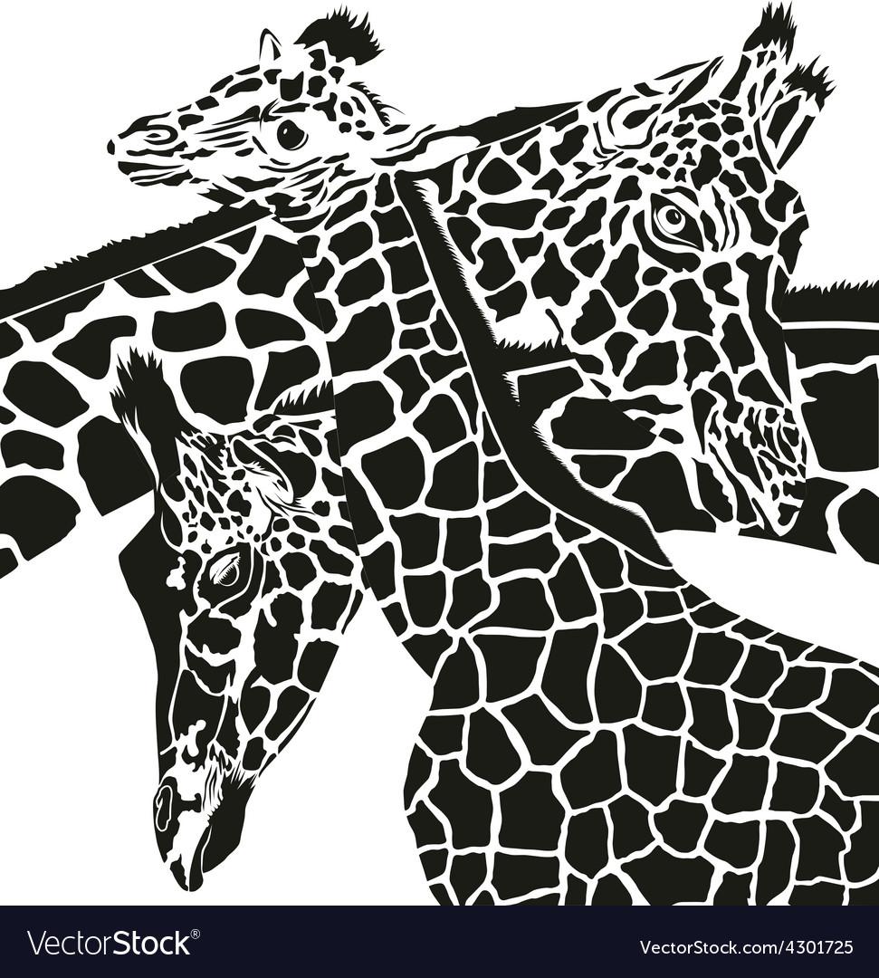 Giraffe heads vector | Price: 1 Credit (USD $1)
