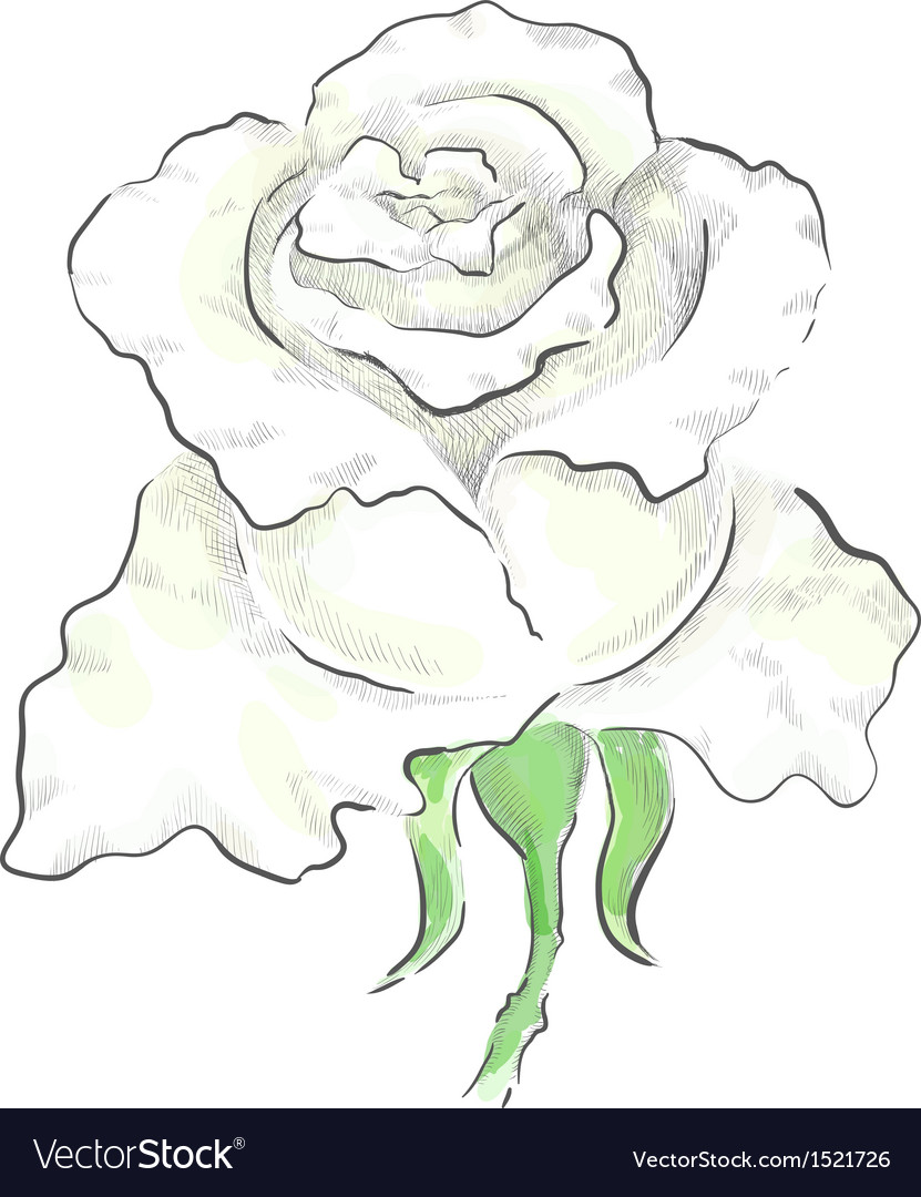 Decorative white rose vector | Price: 1 Credit (USD $1)