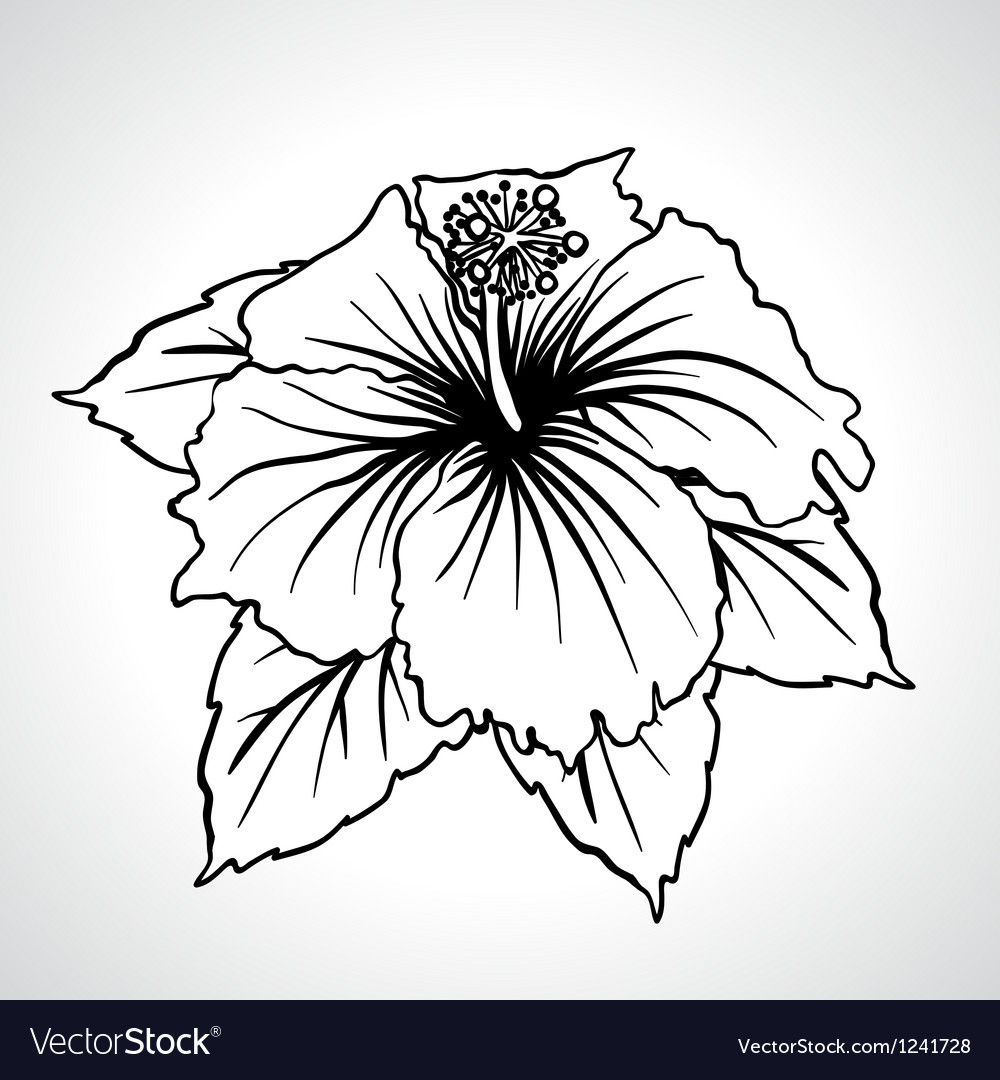 Black macro chinese rose flowers isolated vector | Price: 1 Credit (USD $1)