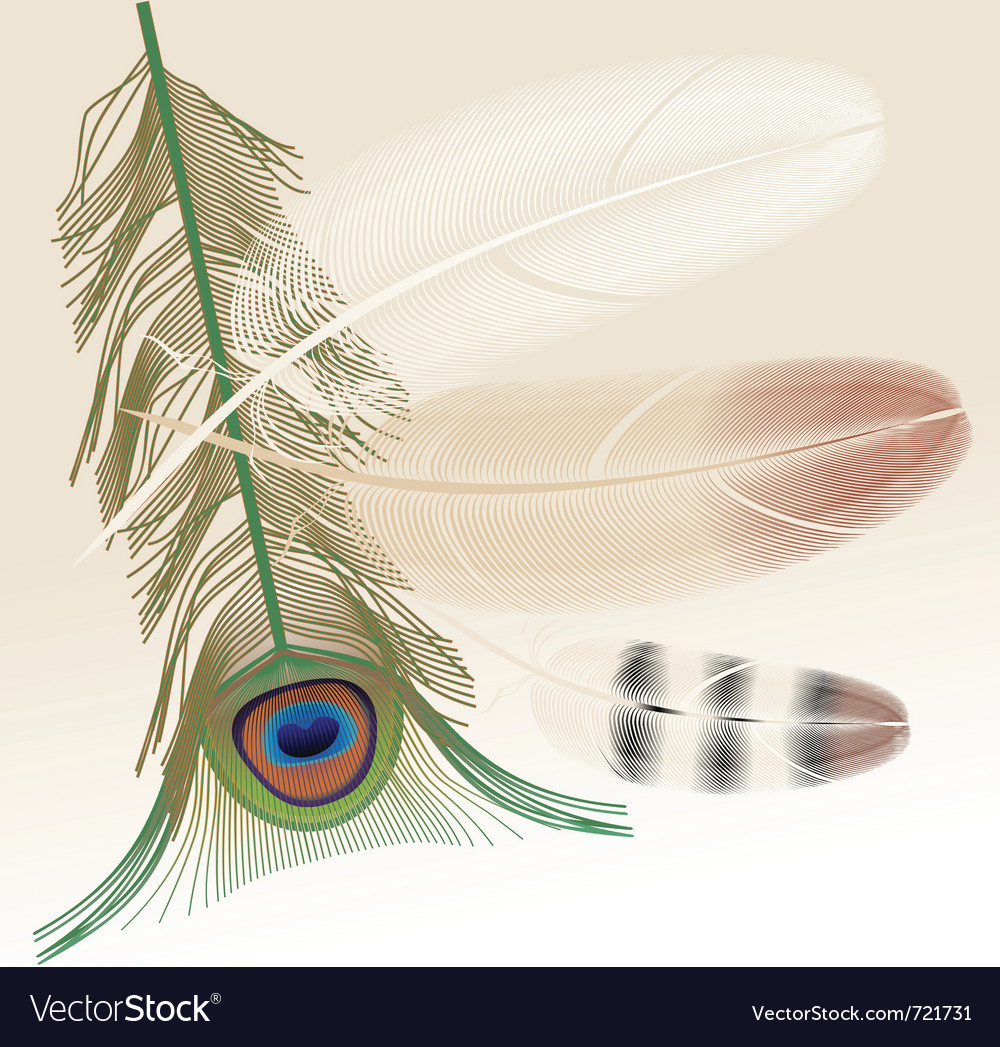 Peacock feather colored vector