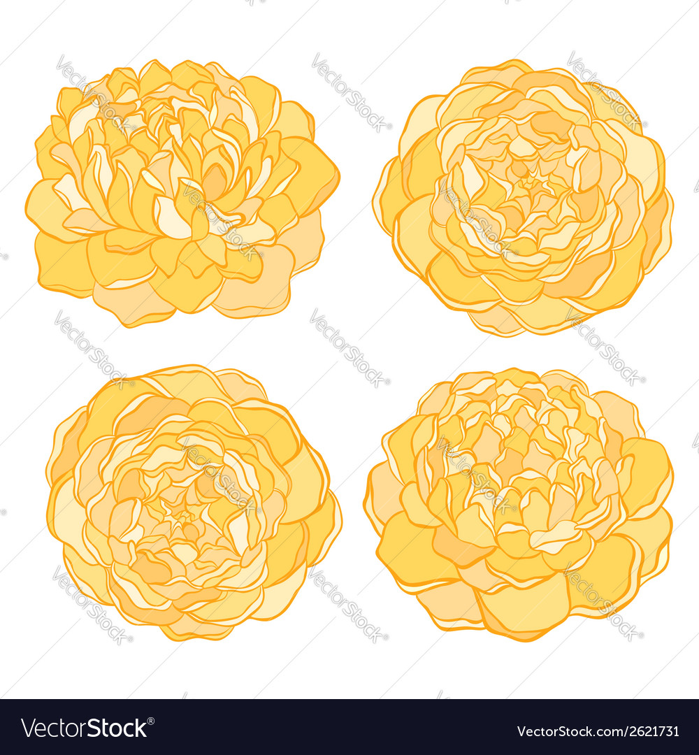 Set of beautiful flower isolated on white vector | Price: 1 Credit (USD $1)