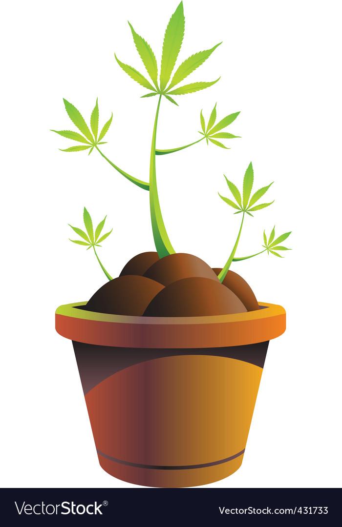 Cannabis pot vector