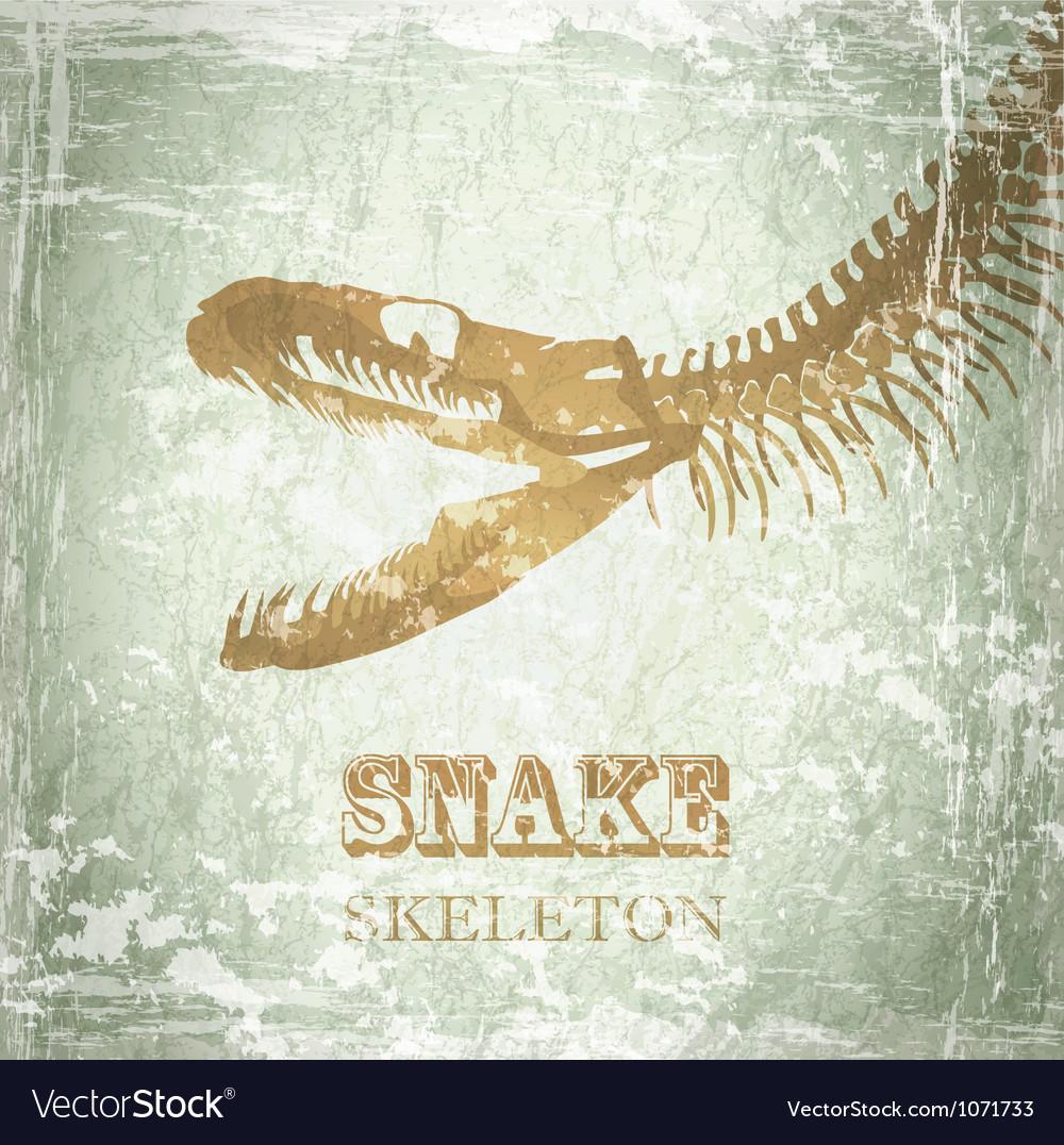 Snake skeleton vector   Price: 1 Credit (USD $1)