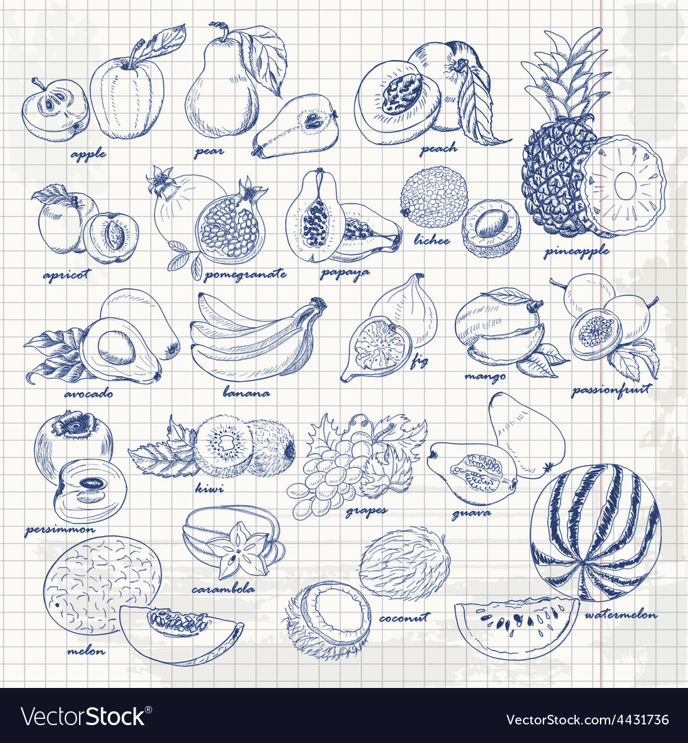Set of fruits on paper hand drawing sketch vector | Price: 1 Credit (USD $1)
