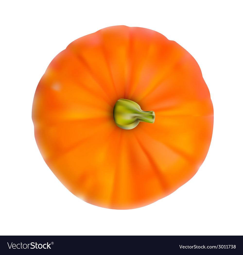 Fresh orange pumpkin isolated on white background vector   Price: 1 Credit (USD $1)