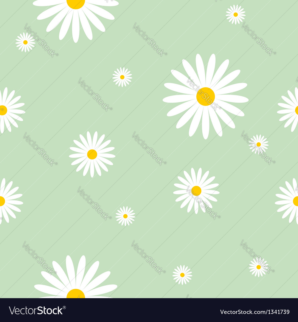 Camomile background vector | Price: 1 Credit (USD $1)