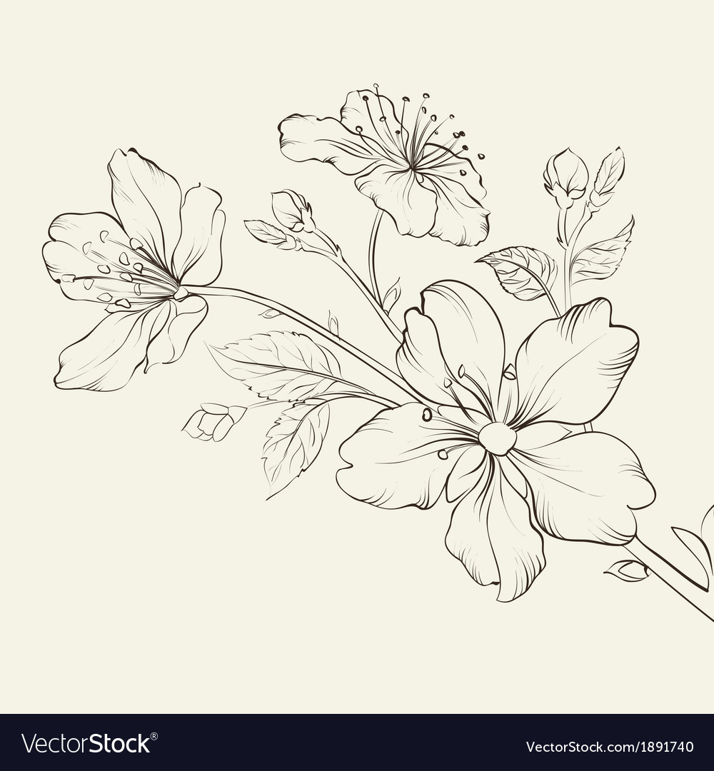 Calligraphy cherry blossom vector | Price: 1 Credit (USD $1)