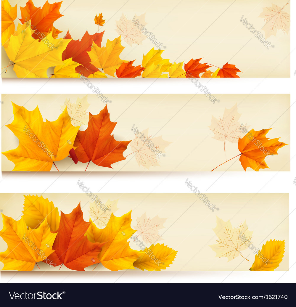 Three autumn banners with colorful leaves vector | Price: 1 Credit (USD $1)