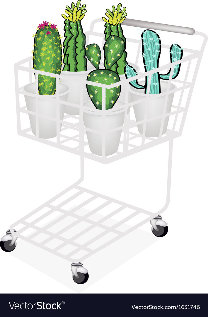 Cactus and cactus flowers in shopping cart vector | Price: 1 Credit (USD $1)