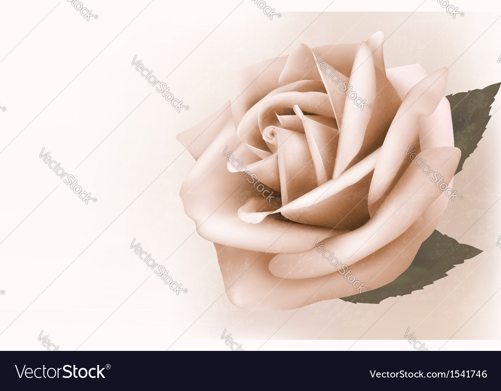 Vintage background with beautiful pink rose vector | Price: 1 Credit (USD $1)