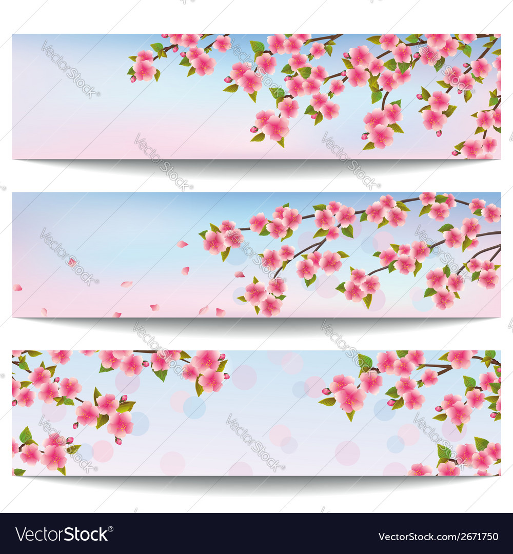 Set of banners with japanese sakura cherry tree vector | Price: 1 Credit (USD $1)