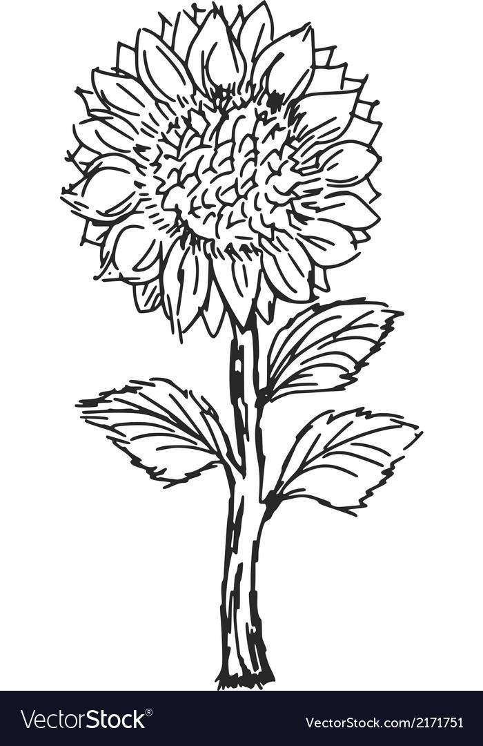 Sunflower vector   Price: 1 Credit (USD $1)