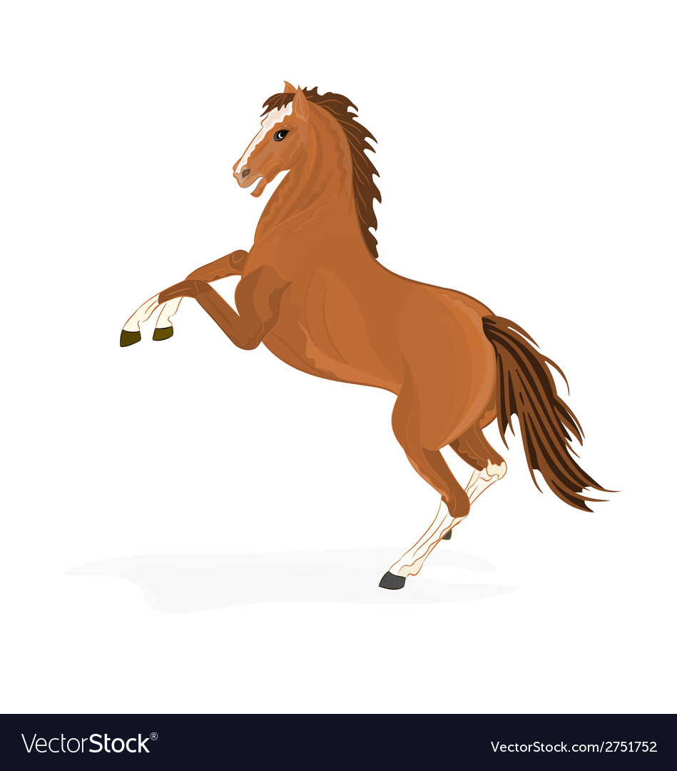 Brown horse vector | Price: 1 Credit (USD $1)