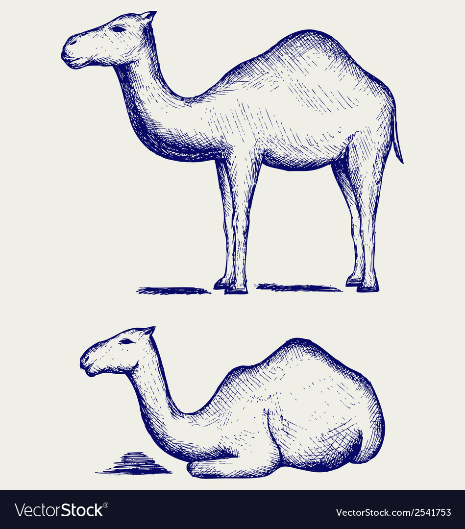 Standing and lying camels vector | Price: 1 Credit (USD $1)