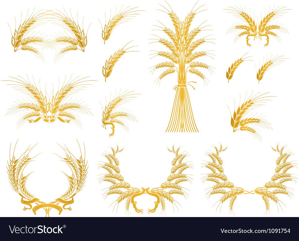 Set of design elements with wheat vector | Price: 1 Credit (USD $1)