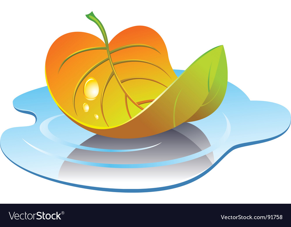 Leaf in puddle vector | Price: 1 Credit (USD $1)