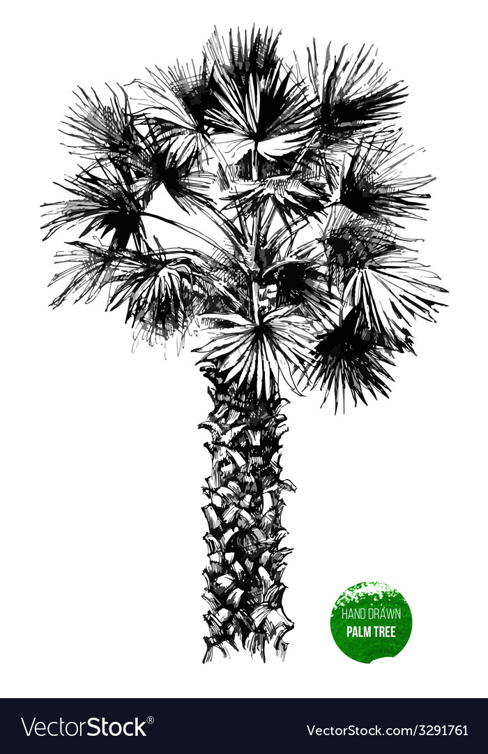 Hand drawn palm tree vector | Price: 1 Credit (USD $1)