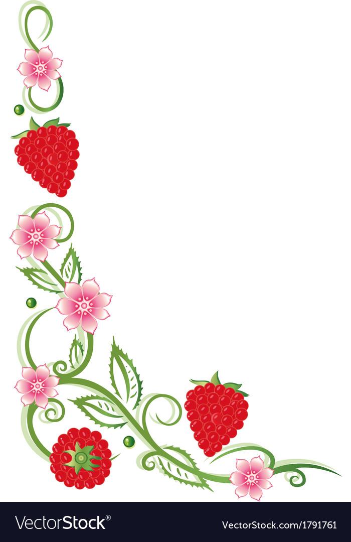 Raspberries fruits vector   Price: 1 Credit (USD $1)