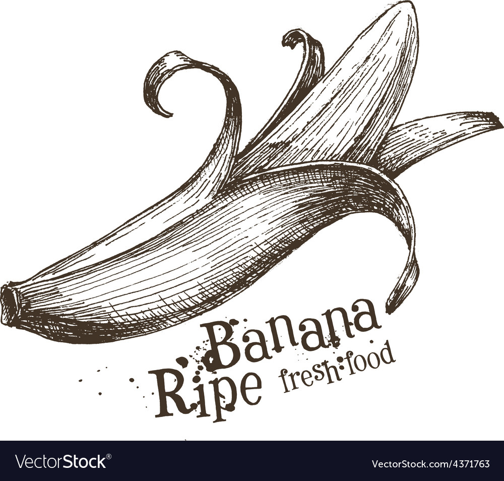 Banana logo design template fruit or food vector | Price: 3 Credit (USD $3)