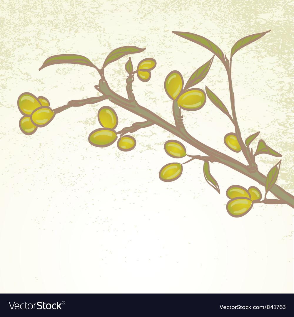 Olive branch vector | Price: 1 Credit (USD $1)