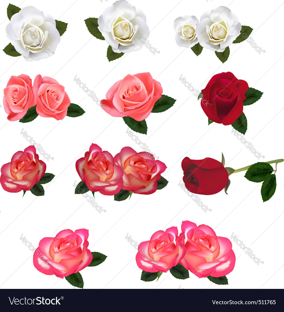 Set of a beautiful roses vector | Price: 1 Credit (USD $1)