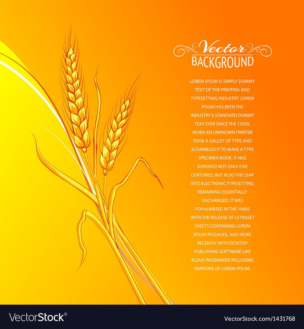 Ears of wheat on orange background vector | Price: 1 Credit (USD $1)