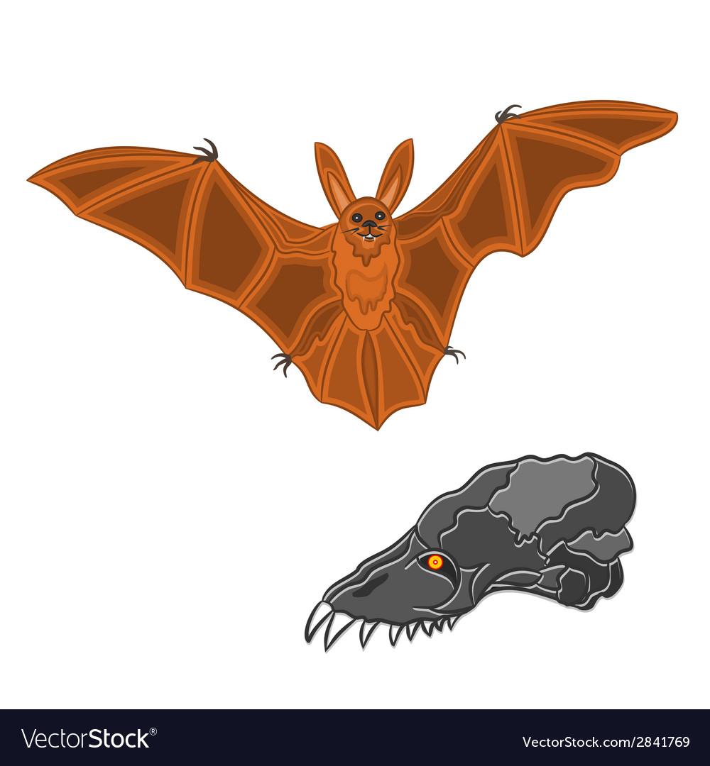 Halloween bat and skull vector | Price: 1 Credit (USD $1)