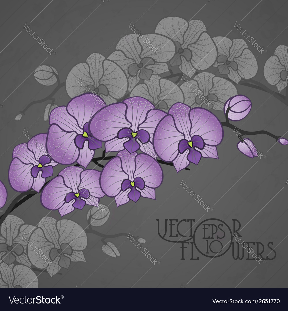 Hand drawing orchid flower vector | Price: 1 Credit (USD $1)